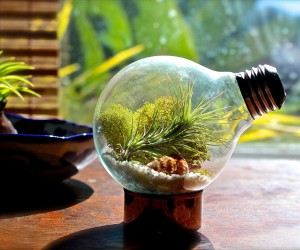 15 Delightfully Diverse DIY Terrarium Ideas: Tiny Green Delights