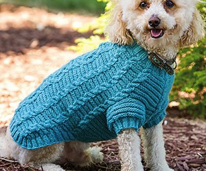 15 Knitting and Crochet Patterns to Keep Your Pet Warm