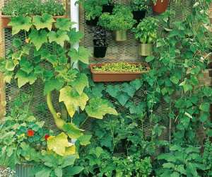 15 Unusual DIY Vegetable Gardens