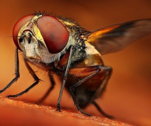 16 Mind Blowing Examples of Insect Macro Photography