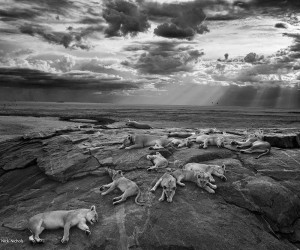 2014 Wildlife Photographer of the Year Competition: The Winning Photos