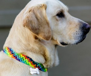 Adorable DIY Doggy Collars For Your Furry Friend