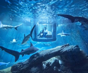 Airbnb Unveils a bedroom in shark-filled Paris aquarium