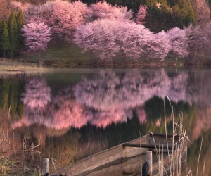 Amazing Nature Photography in Japan by Makiko Samejima