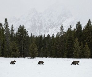 Amazing Wild Animals in Grand Teton National Park by Nick Sulzer