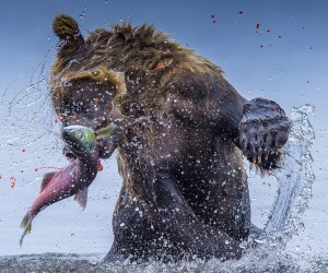 Amazing Wildlife Animals Portrait Photography by Jon Langeland