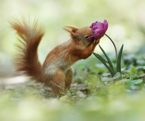 Amazing WIldlife Photos of European Squirrels by Julian Rad