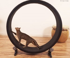 An Exercise Wheel for Cats
