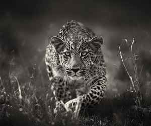 Animal Portraits by British Wildlife Photographer Lee Fisher
