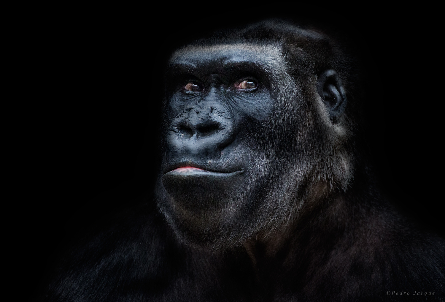 Animal Portraits By Pedro Jarque Krebs