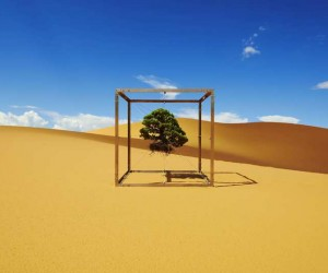 Azuma Makoto Captures His Bonsai Trees Journey Around The Globe