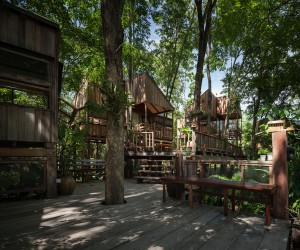 Backyard Jungle: Stunning Eco-Friendly Homes Engulfed in Forest Canopy