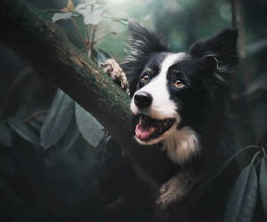 Beautiful and Magical Portraits of Dogs by Kristna Kvapilov