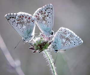 Beautiful Butterfly Pictures by Sandra Graf