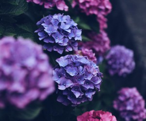Beautiful Japanese Flowers Photos by Kaori Tanimoto