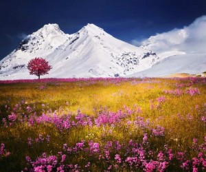 Beautiful Landscapes by Bess Hamiti