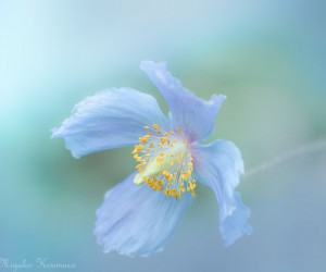 Beautiful Macro Flower Photography by Miyako Koumura