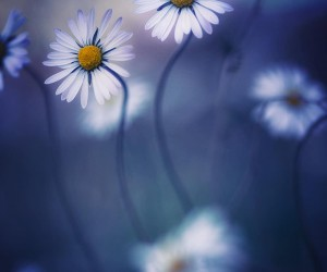 Beautiful Macro Flowers Photography by Anja Streber