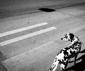 Beautiful Street Photography by Enrico Markus Essl