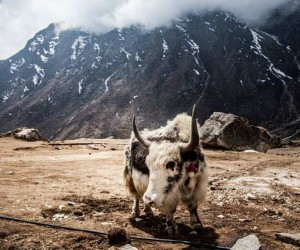 Berta Tilmantaite Sells Her Photos Of The Himalayas And Donates The Money