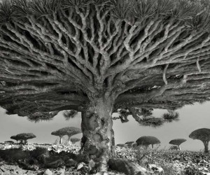 Beth Moon Spent 14 Years Capturing The Worlds Most Aged Trees