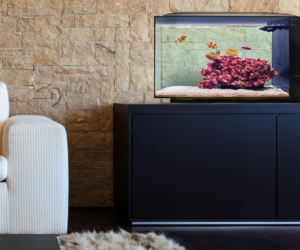 BIOTA Sustainable Aquarium