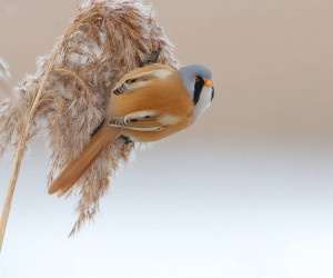 bird_brilliance: Stunning Bird Photography by Jens Stahl