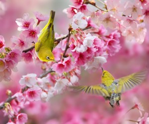 Birds Photography by Sue Hsu