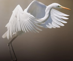 birds_adored: Wonderful Birds Photography by Diego Maffina