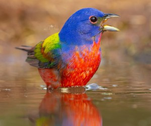 birds_adored: Wonderful Birds Photography by Lee Anne Russell