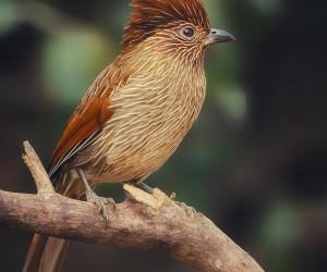 birdsofinstagram: Beautiful Birds Photography by Tarun Dang