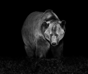Black and White Animal Portraits by Troy Moth