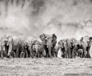 Black and White Animals Photography by Peter Delaney