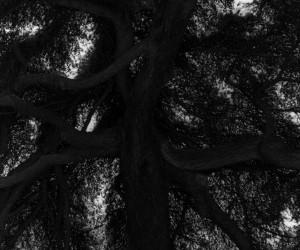 Black and White Photography by Bohnchang Koo