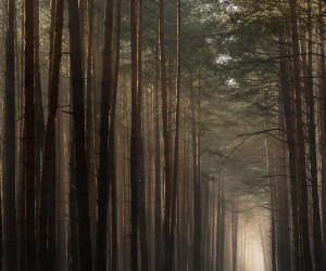 Breathtaking Forest Photography by Jakub Wencek