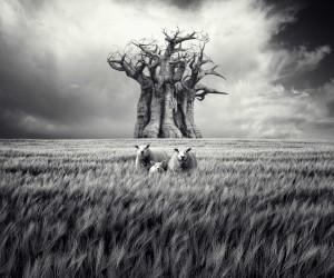 Brilliant Fine Art Photography by Luis Beltrn