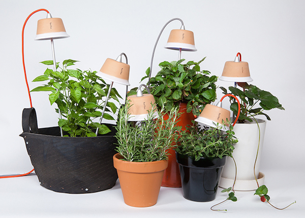 Bulbo | Grow Vegetables Indoors with LED Lights