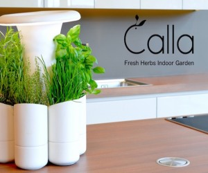 Calla: An Indoor Herb Garden