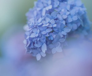 Candy Coloured Flowers Photography by Miyako Koumura