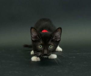 Casey Elise Captures Black Shelter Cats