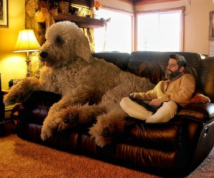 Christopher Cline Goes On Imaginative Adventures With His Giant Dog