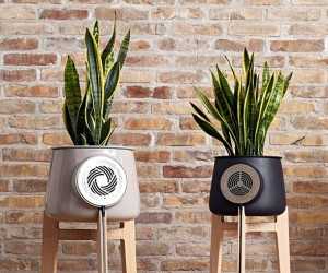 Clairy: The Beautiful and Natural Air Purifier