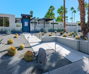 Create a garden with cactus and palm trees