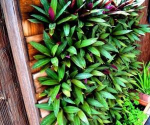 Creative DIY Pallet Ideas for Your Garden