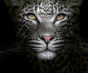 cuteanimals: Wildlife Animal Portraits by Irene Nathanson
