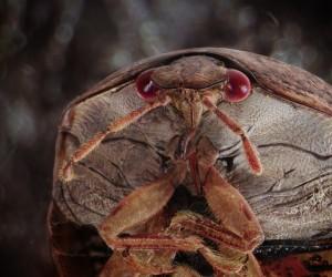 Daniel Kariko Captured Miniature Monsters Living in Our Homes