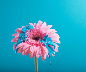 Dropping: Amazing Flower Photography by Cristo Oviedo