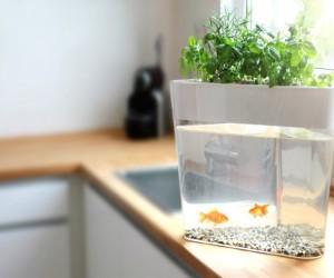 Ecofarm: Grow Your Own Food Using Aquaponics