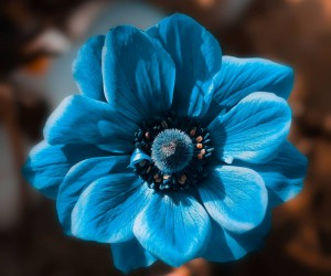 Fabulous Fine Art Flower Photography by Peter Wyss