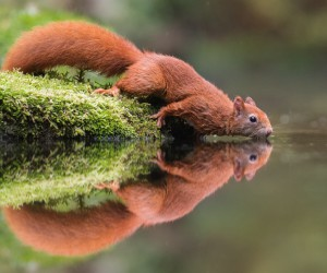 Fabulous Wild Animals Photography by Dick van Duijn